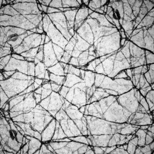 photo noir et blanc de branches entremêlées
