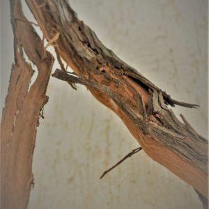 gros plan sur une branche