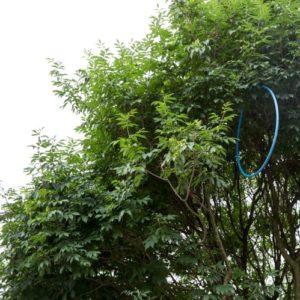 cerceau bleu dans un arbre