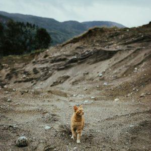 un petit chat roux se promène dans un canyon désert