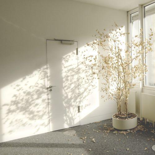 Photo de Sam Marx d'une plante qui perd ses feuilles dans un appartement vide